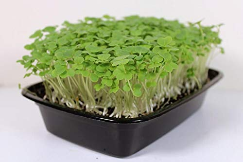 Image for 4 Tips on How to Harvest Microgreens