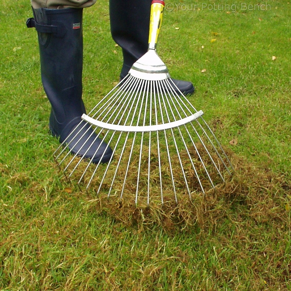 Step 1 of How to care for your lawn in Autumn