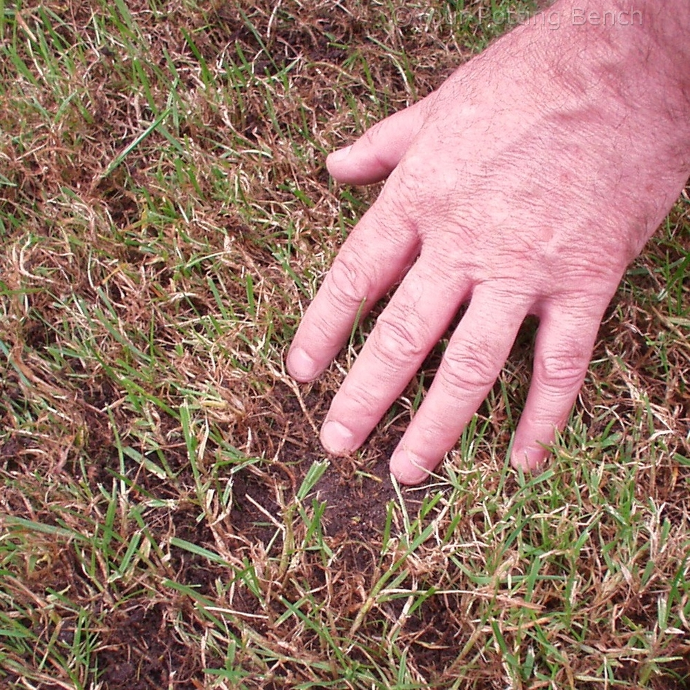 Step 2 of How to care for your lawn in Autumn