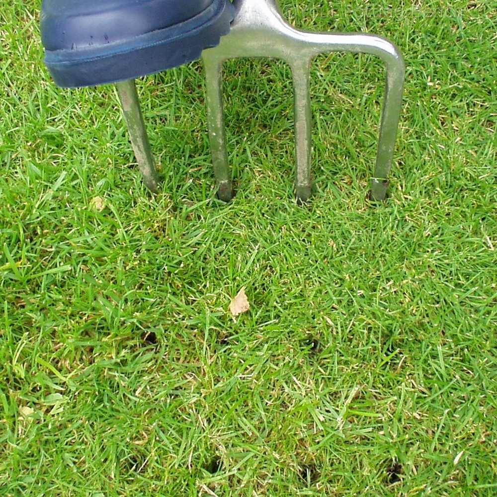 Step 3 of How to care for your lawn in Autumn