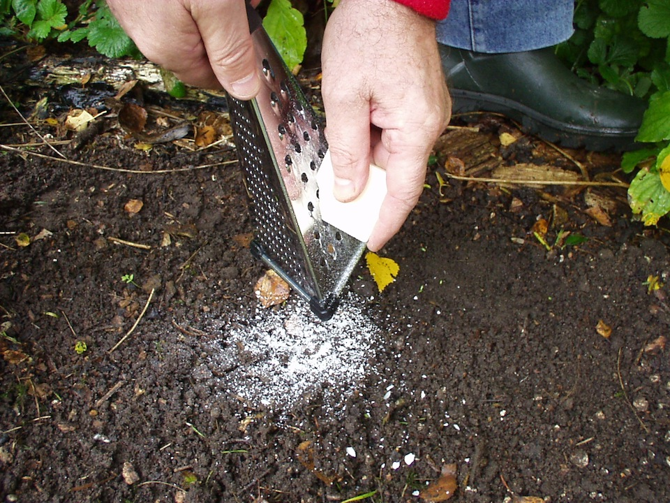 Step 4 of How to protect bulbs in the garden