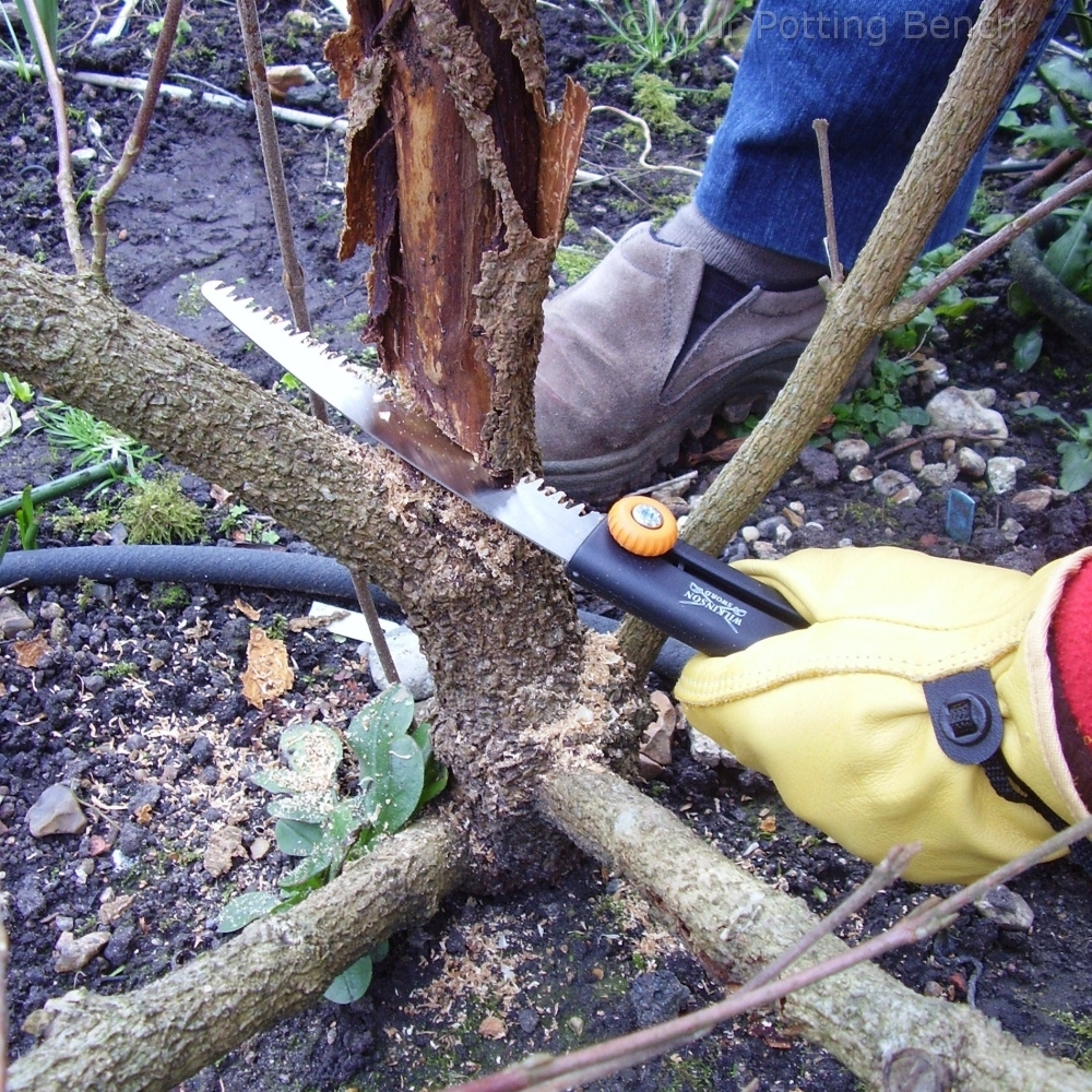 Step 1 of How to Prune