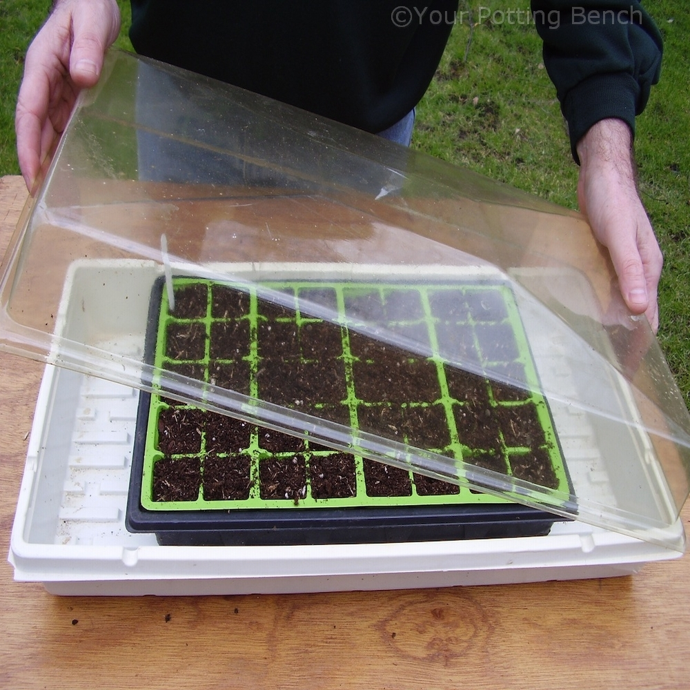 Step 4 of How to sow large seed