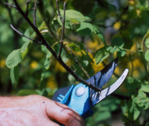 Learn about How to: Maintenance Pruning