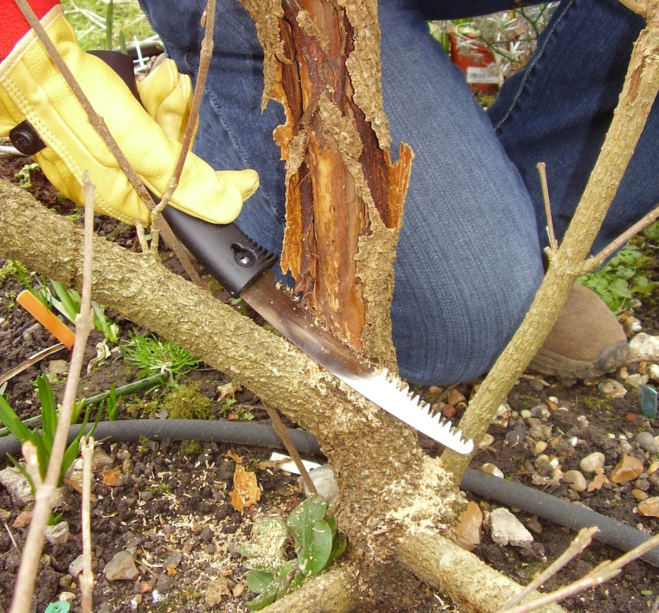 Step 3 of How to: Maintenance Pruning