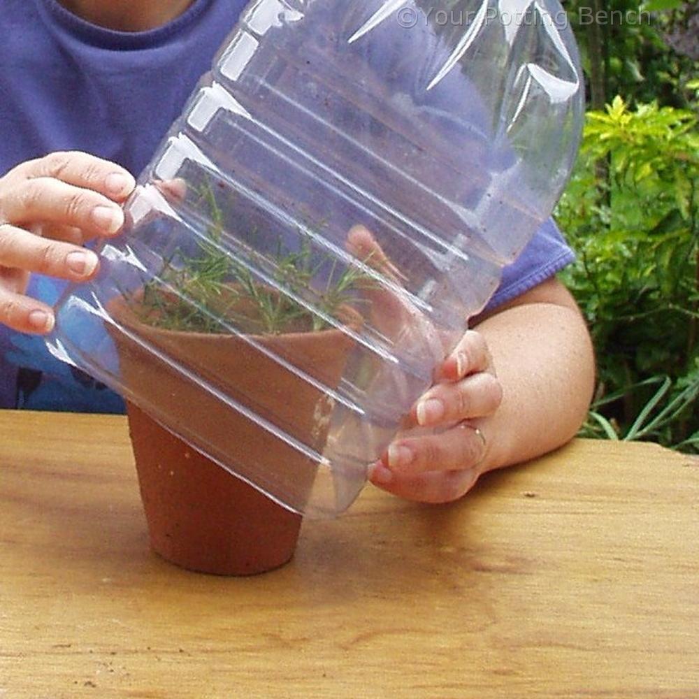 Step 4 of How to take semi-ripe cuttings