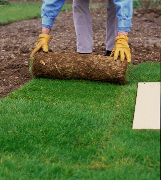 Step 2 of How to turf a lawn