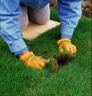 Step 3 of How to turf a lawn